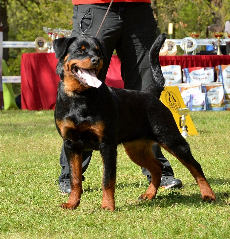 GANDALF Marstal BEST STUD DOG PL KS'15