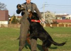 Przygotowania z zakresu obrony do IPO (kwiecień 2008r)